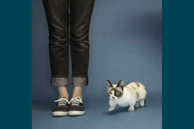 Fizz Girl, the World's Shortest Cat