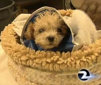 Gem was found inside a bag at a San Francisco recycling plant.