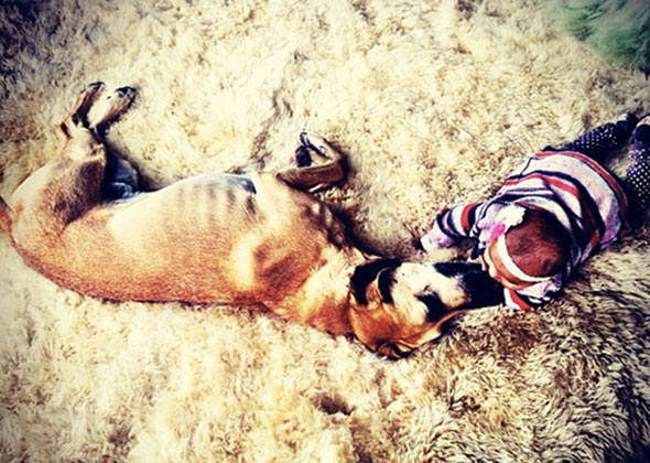 Katherine Heigl's dog Oscar with her daughter Adalaide