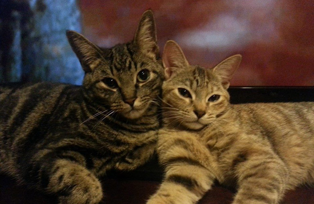 Two Cats Selfie