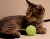 Blind kitten