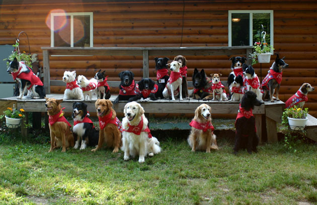 Dog Scouts Group Photo