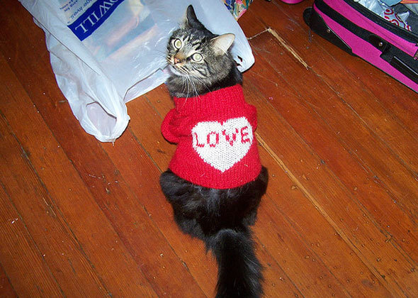 black cat in red love sweater