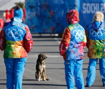 A stray dog sits near Olympic volunteers in Sochi on Thursday.