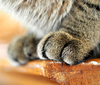 Close-up shot of cat paws