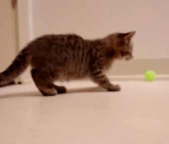 Oskar's First Toys wins the grand prize at The Friskies.