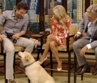 Bradley Cooper on Live! With Kelly with his dog, Charlotte.