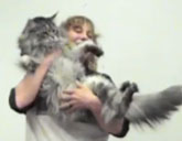 Stewie, the world's longest cat