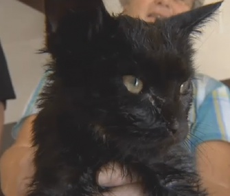 Trouble the kitten was rescued from a garage drain near Pittsburgh.