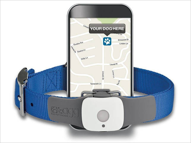Lost Pet Tech Comparing Cat And Dog Tracking Collars