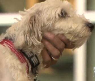 Gordo, the dog who was struck by a stolen van in Los Angeles last week, is headed home.