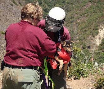 A 10-week-old stray puppy was rescued from a ravine in San Diego County.