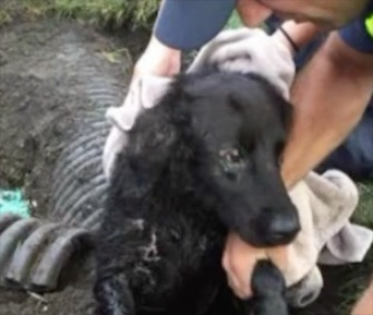 Edgar was found stuck in a 12-inch drainpipe after he'd been missing for a week.
