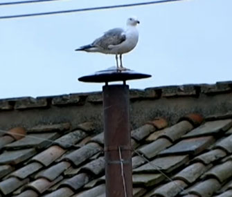 A seagull sits on the chimney over the Sistine Chapel on Wednesday.