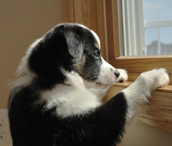 Puppy waiting at window