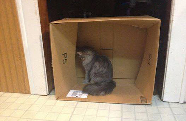 Hide and Seek Cat in Box