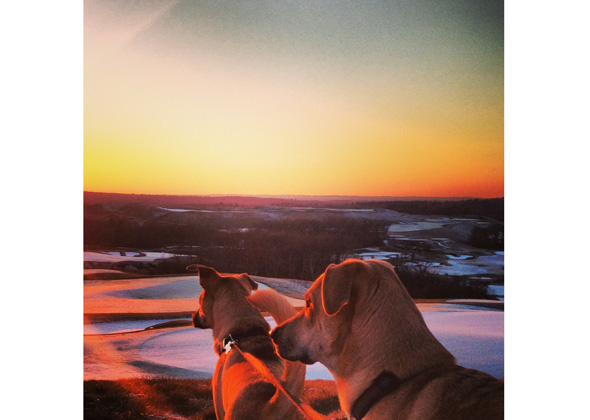 Rescue dogs take in the view.