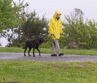 Walking dog in the rain