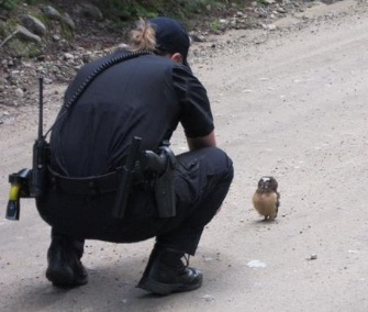 Deputy talks to owlet in Colorado