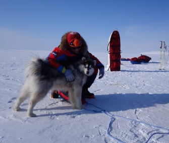 Kimnik the Husky was rescued from the Arctic after the explorers she was with went missing.