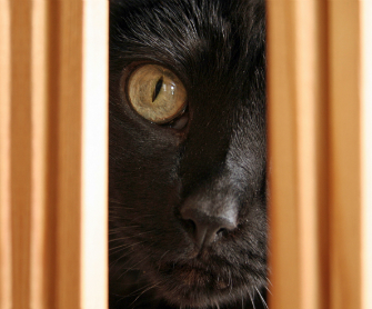 Cat masking pain