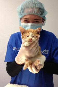 volunteer holding kitten