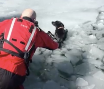 A rescue crew used an airboat to save Sadie after she'd been stranded on an ice patch in Utah for days.