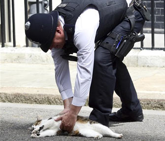 A police officer moves Larry the cat from in front of No. 10 Downing Street.