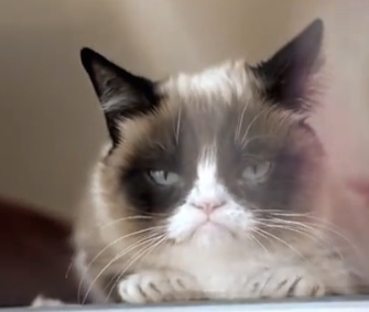 Grumpy Cat joins other feline Internet stars in the music video Cat Summer.