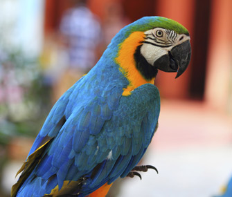Adopt a Rescued Bird Month Parrot