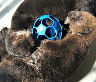 Two orphaned sea otter pups now have a new home at the Vancouver Aquarium.
