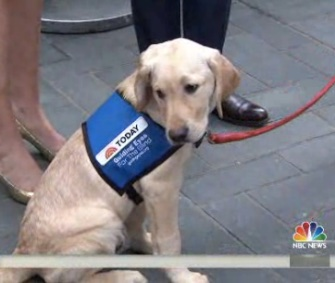 """The Today show's """"Puppy With a Purpose"""" earned his puppy jacket this week."""