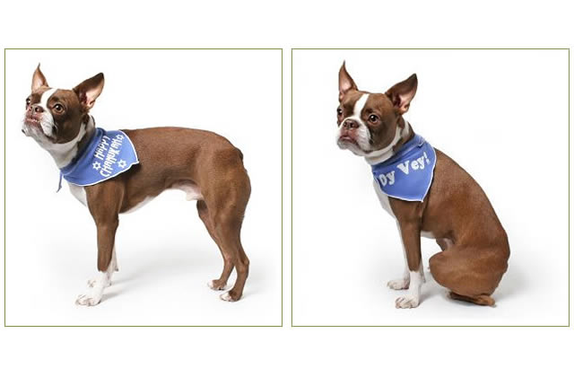 Happy Hanukkah Dog Bandana