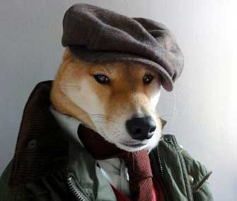 dog wearing menswear