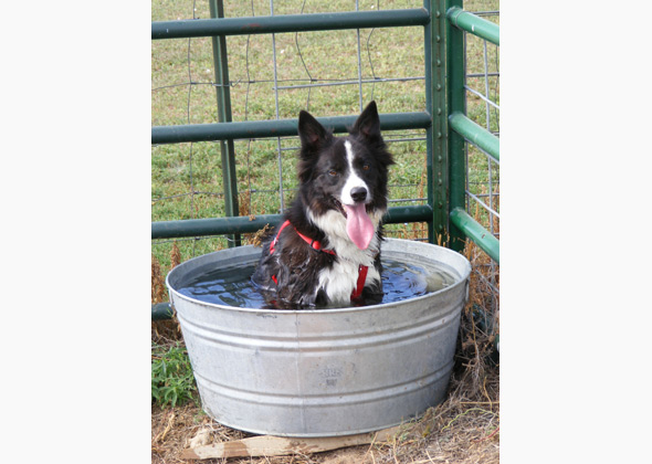 Logan the Border Collie sits in a bucket