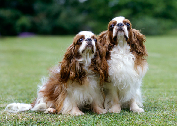 Names For Dogs With Brown And White Fur