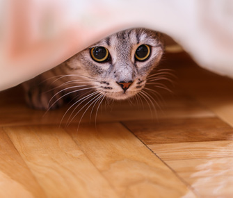 Is Your Home Life Stressing Your Cat Out?
