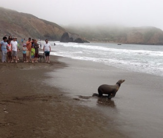 Pickles the juvenile sea lion found entangled in fishing line. He was treated and released.
