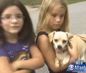 Bell, a 3-year-old Chihuahua, is being credited with sniffing out three missing girls in the woods.