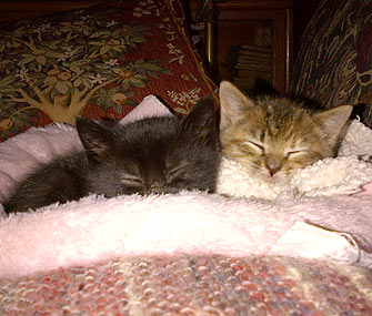 Orphan Kittens Napping