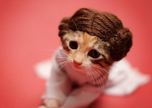 Wendy McKee kitten in Princess Leia costume