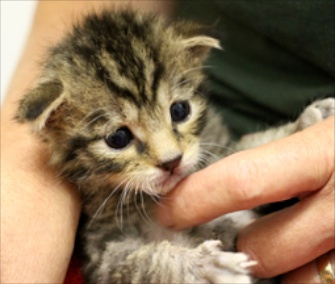 A rare wildcat kitten was born in July at the U.K.'s Wildwood Trust.