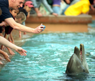 Tourists feed dolphins at SeaWorld Orlando