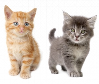 With a simple request on your Uber app, you might able to get an office visit from some adorable kittens today.