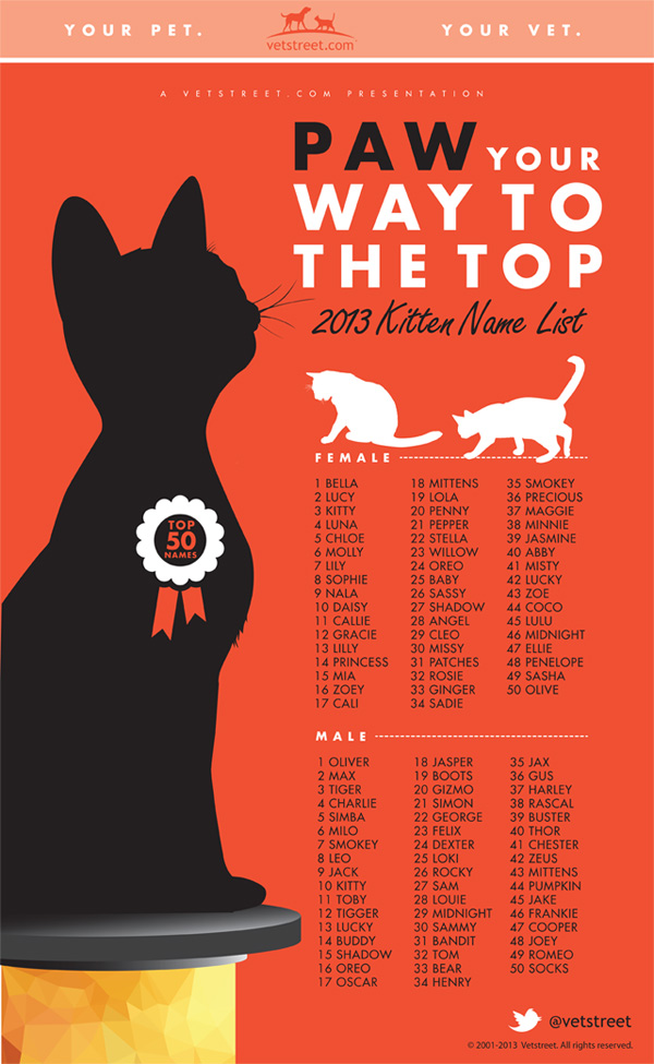 Most Popular Kitten Names 2013— Infographic