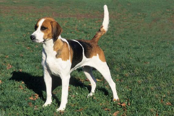 Small Dog Adoption New England
