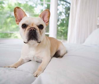 Dog Sitting on White Bedding