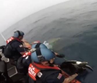 The U.S. Coast Guard rescued and released two entangled sea turtles off the coast of California.