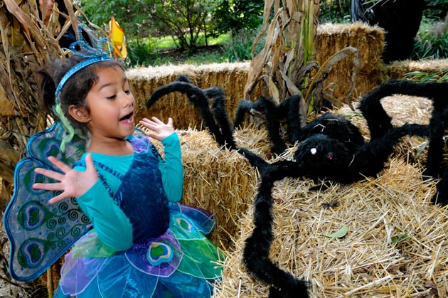 zoos host scary fun for halloween. Black Bedroom Furniture Sets. Home Design Ideas