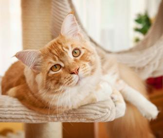 Cat lying on tree